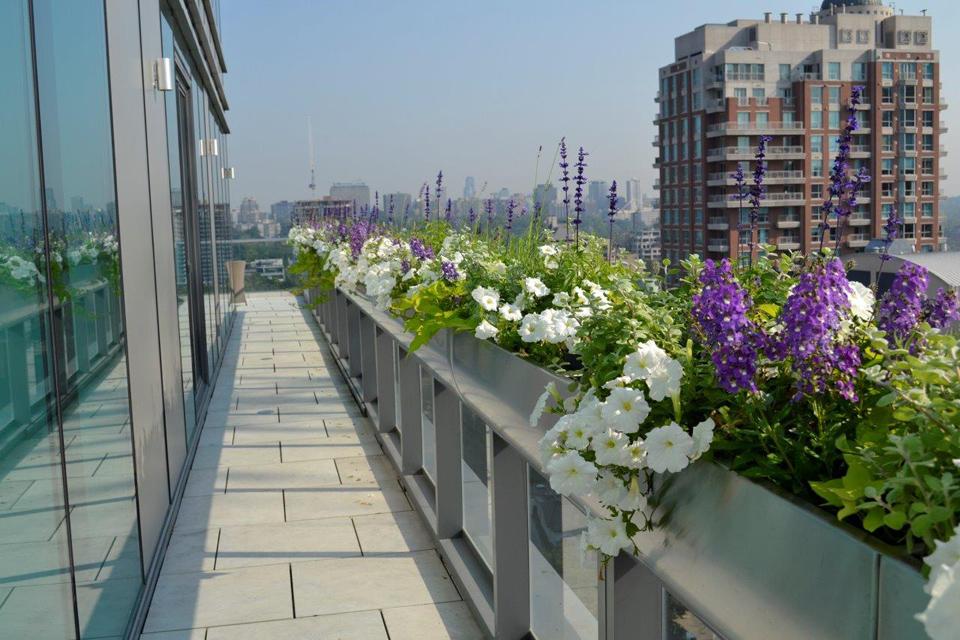 urban garden design toronto