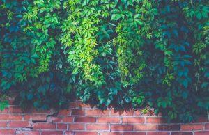 Living walls 101 landscaping