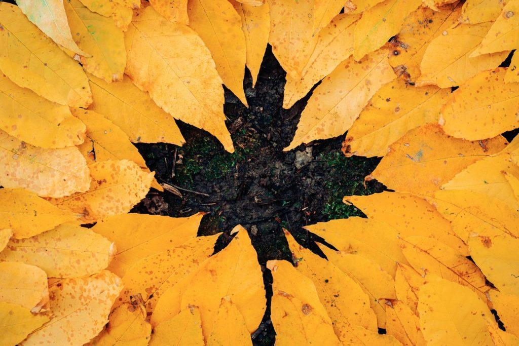 october landscaping leaves