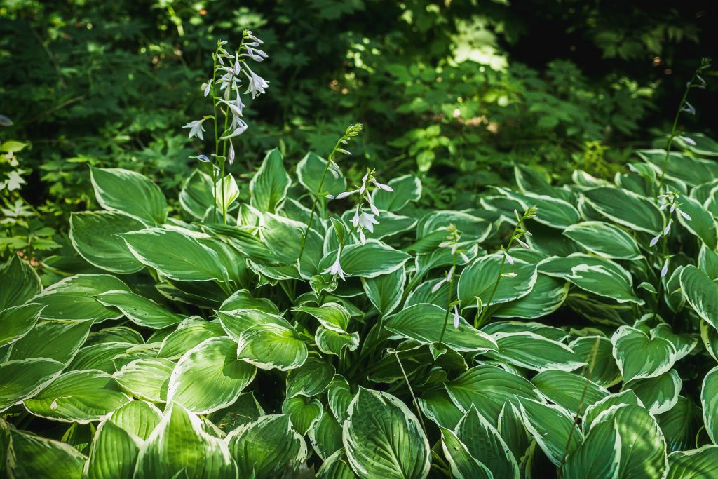 Best Plants For Landscaping Shady Yards