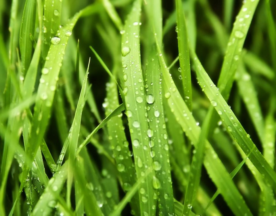 Why Mowing Wet Grass Is A Bad Idea
